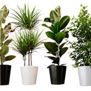 Gasten zijn net plantjes aandacht gastvrijheid training Mind Your Guest Robert Bosma