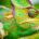 online merkstrategie merk marketing communicatie adviseur model van aandacht gastvrijheid gasten gastvrij zijn gastvrijheid service kwaliteit aandacht veiligheid vertrouwen the connect effect Mind Your Guest Robert Bosma training hospitality klantvriendelijkheid merk merkstrateeg corona coronavirus virus crisis bedrijven